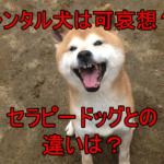 レンタル犬は可哀想?コロナ感染の可能性は?セラピードッグとの違いは?